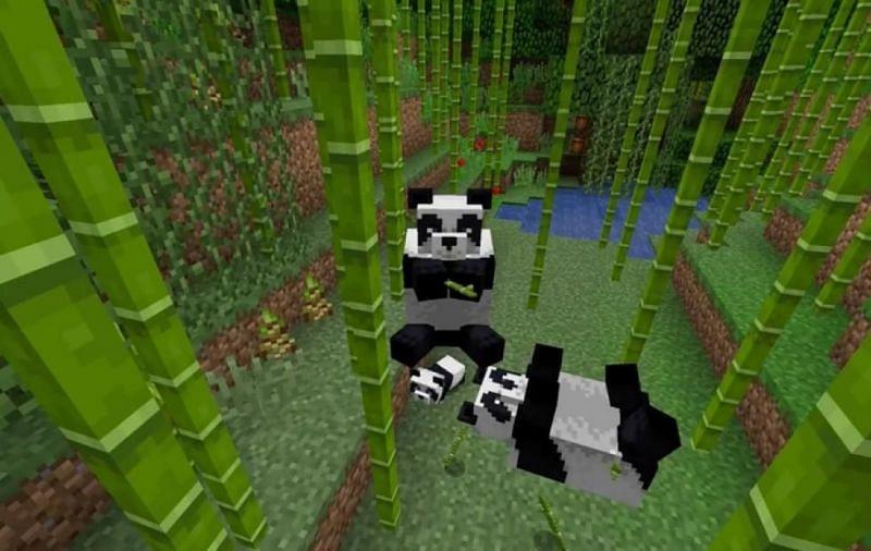Minecraft Find Panda